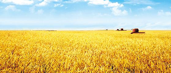 内蒙古云天化农业发展有限公司图片